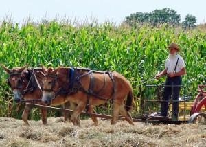 amish-farmer