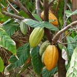 Award winning Ghanaian cocoa farmer visits Hershey