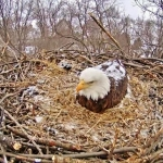 York County's Codorus State Park Bald Eagle nest live-stream webcam
