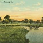 VIntage postcard wyomissing farm scene reading pa