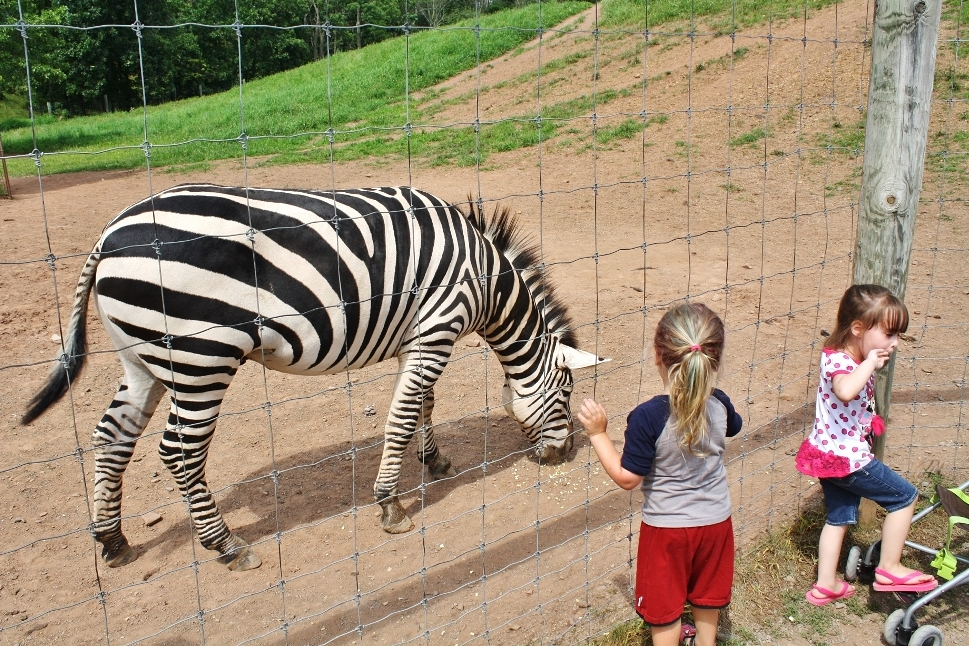 Lake Tobias Wildlife Park - Halifax, PA