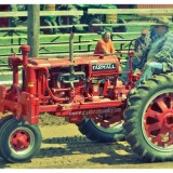 Farmall Antique Tractor